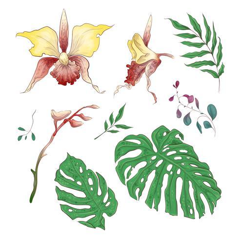 Orchidee tropische bloemen Floral elementen in de hand tekenen stijl. Vector