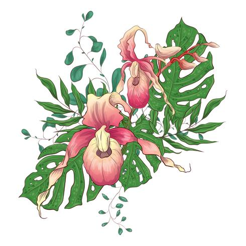 Sistema floral tropical exótico del diseño del vector de las flores de la orquídea del paphiopedilum de los ramos.