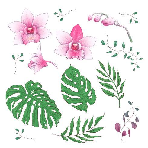 Orquídeas flores tropicales elementos florales en mano dibujar estilo. Vector