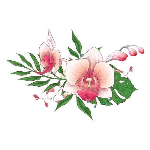 Exotic tropical floral bouquets paphiopedilum orchid flowers vector design set.