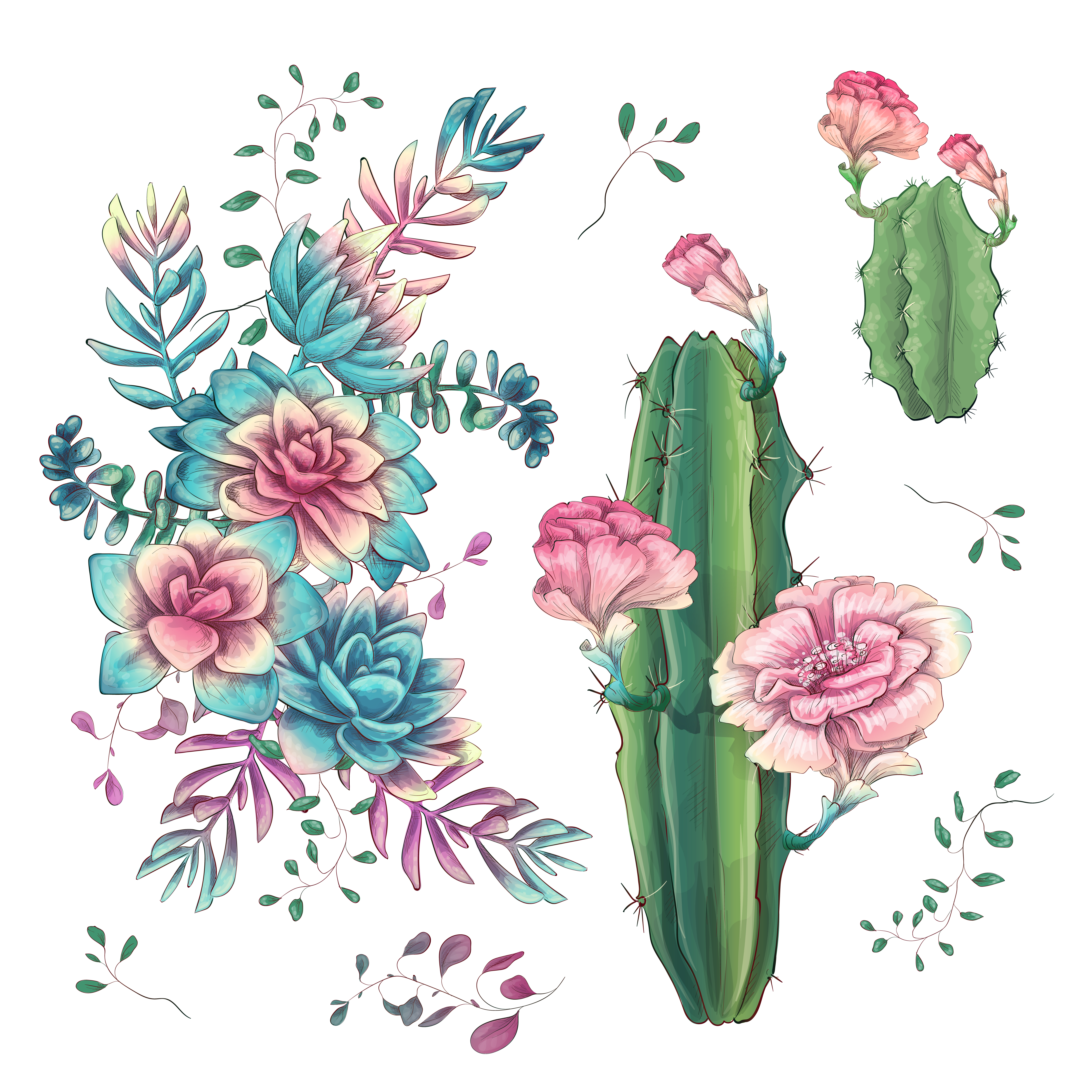 Floral And Botanical Logos Collection: Succulents. Cacti Hand Drawn On A White Background