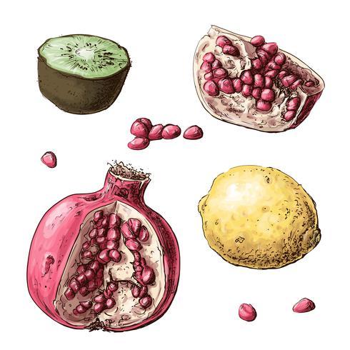 Stel vruchten in. Citroen, granaat, kiwi. Vector illustratie
