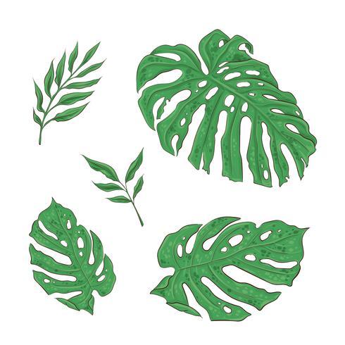 Brilhante conjunto de folhas tropicais verdes. Vetor
