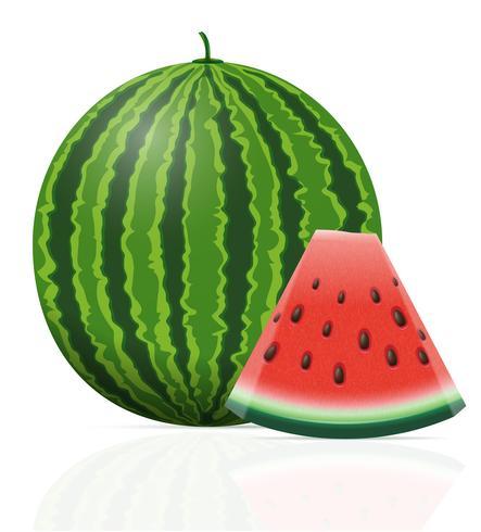 watermeloen rijpe sappige vectorillustratie