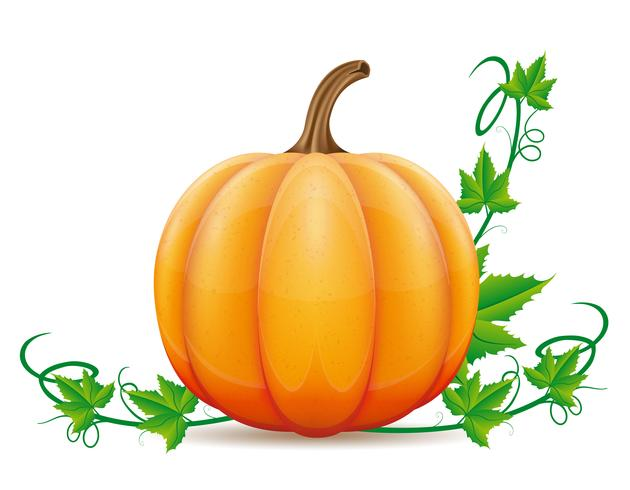 pumpkin and leaf vector illustration