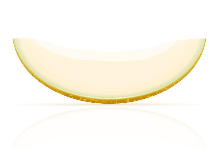 ilustração vetorial suculenta madura de melão