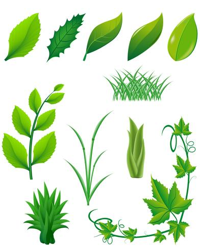 icon set of green leaves and plants for design vector