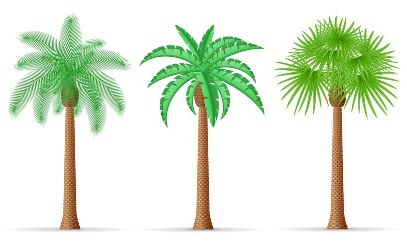 Ilustración de vector de palmera
