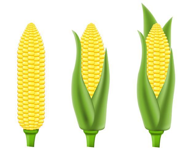 illustration vectorielle de maïs