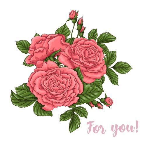 Conjunto de rosas corais. Mão, desenho, vetorial, ilustração vetor