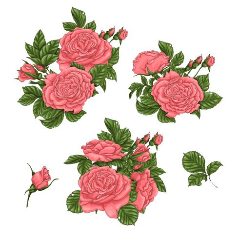 Ensemble de roses de corail. Main, dessin d'illustration vectorielle vecteur