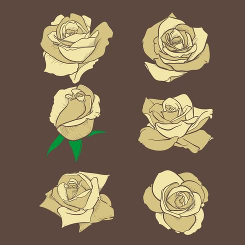 Fleurs roses, boutons et feuilles vertes. Collection de Roses Set. icône rose et symbole