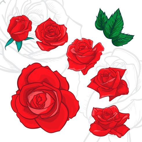 Fiori rose, boccioli e foglie verdi. Collezione Roses Set. icona e simbolo di rosa
