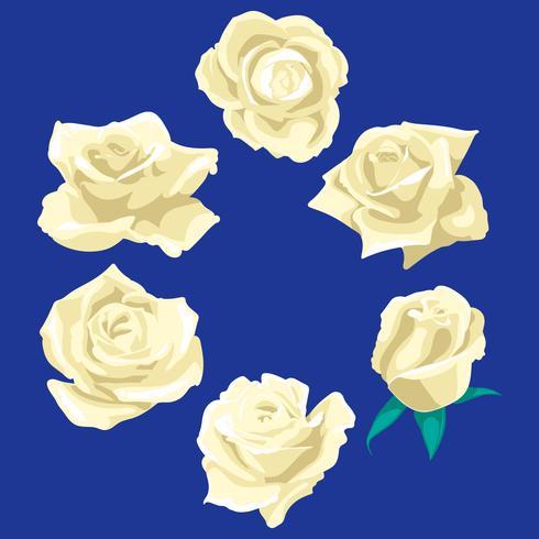 Blüht Rosen, Knospen und grüne Blätter. Rosen Set Sammlung. Rose Symbol und Symbol