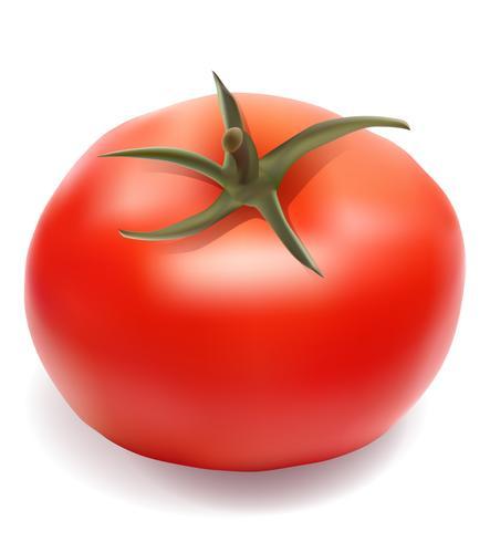illustrazione vettoriale di pomodoro