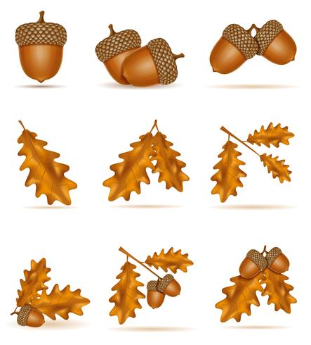 conjunto de bolotas de carvalho Outono ícones com folhas ilustração vetorial vetor