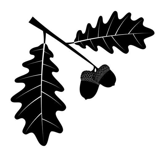 eiken eikels met bladeren zwarte omtrek silhouet vectorillustratie