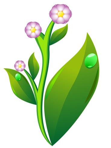 blossom and leaf of potato vector