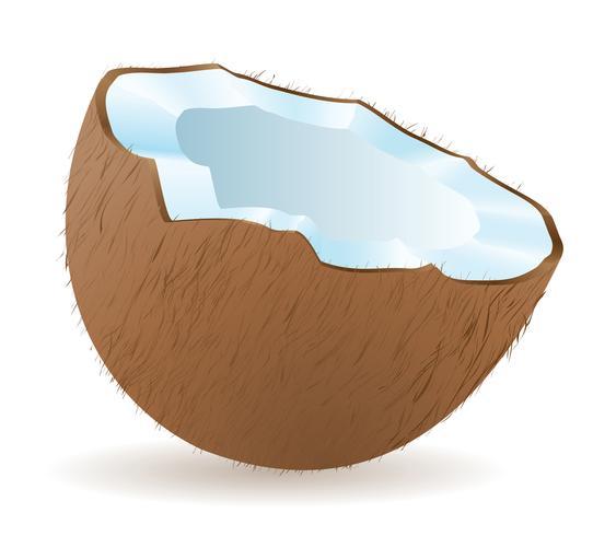 ilustração vetorial de coco