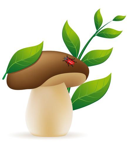 illustrazione vettoriale di funghi porcini
