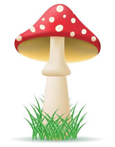 illustrazione vettoriale di fungo amanita
