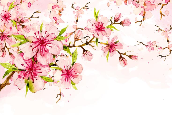 Cherry flowers blossom  vector