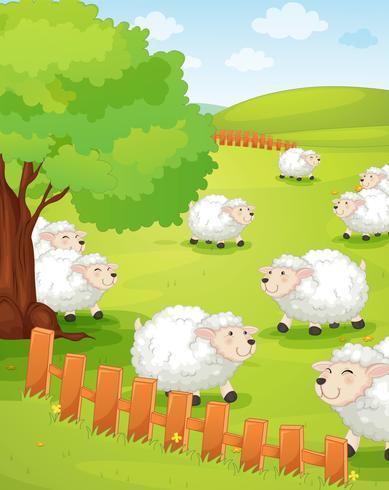 Lamm auf grünem Gras
