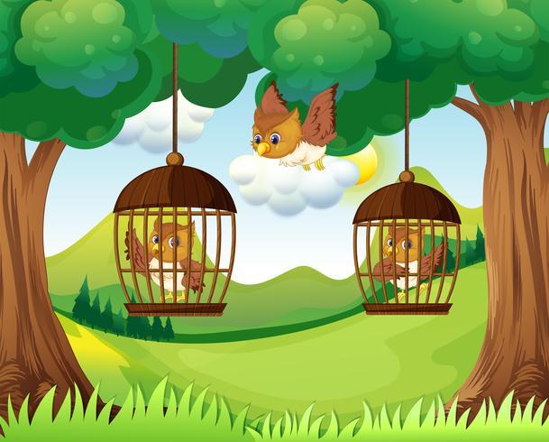 Eulen in Käfigen, die an Bäumen hängen