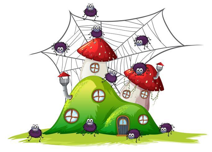 Ragno alla casa di collina
