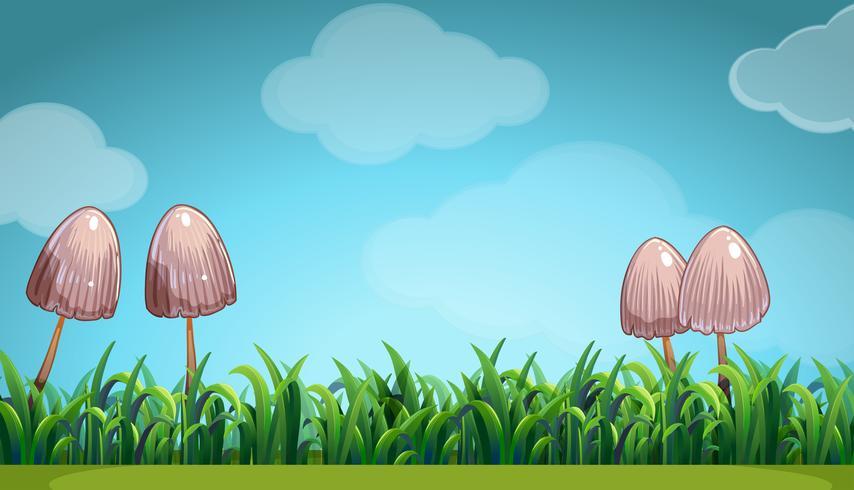 Scène avec des champignons dans le champ