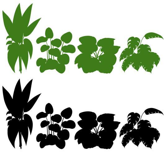 Conjunto de silueta de planta