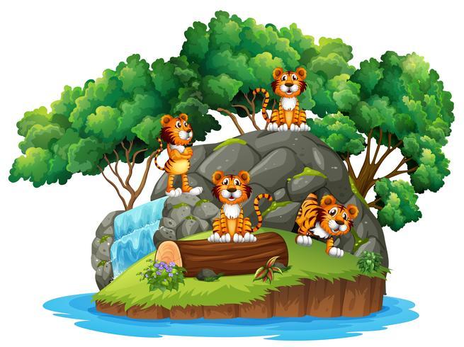 Tiger bei isolierter Natur