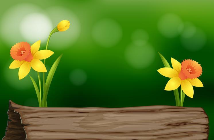 Flores de narciso y tronco.