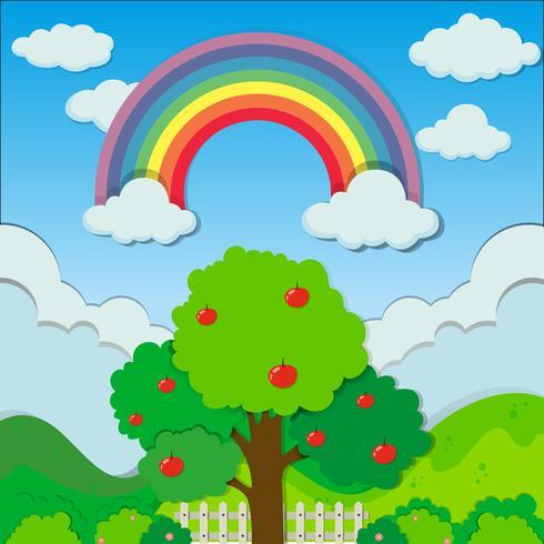 Rainbow over the apple tree