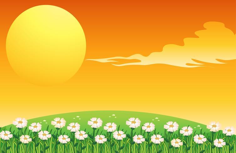 Uma cena do sol
