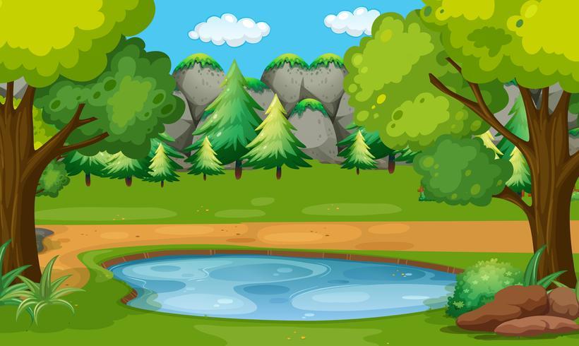 Scena con stagno nei boschi