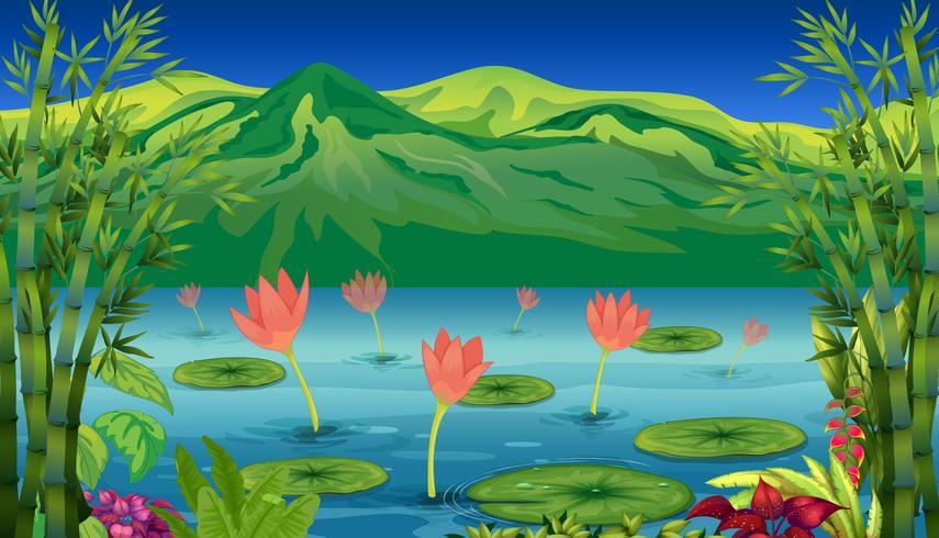 Vattnet liljor och blommor vid sjön