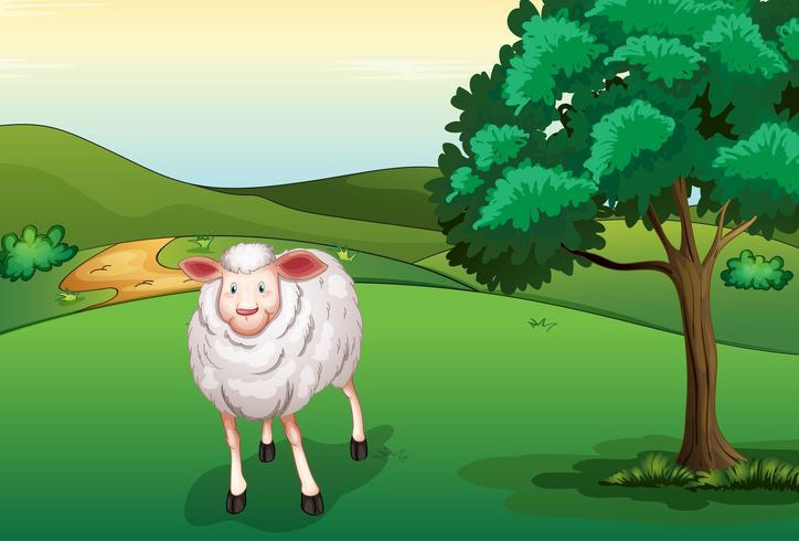 Una oveja sonriente