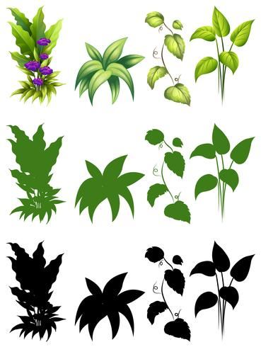 Conjunto de design de planta