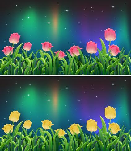 Scènes de fleurs de tulipes roses et jaunes dans la nuit