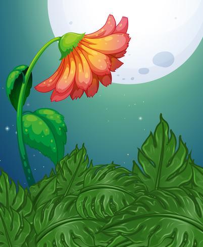 Flor vermelha na noite de lua cheia