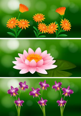 Background design with different types of flowers