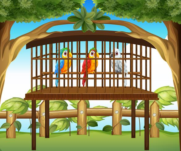 Macaw parrots in wooden cage