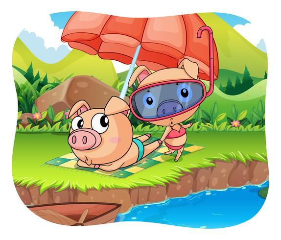 Cerdos relajantes junto al estanque