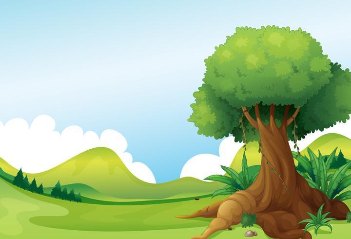 Un grand arbre avec des plantes de vigne près des collines