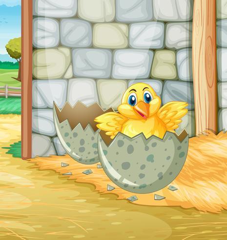 Litet kycklingkläckande ägg i ladugården