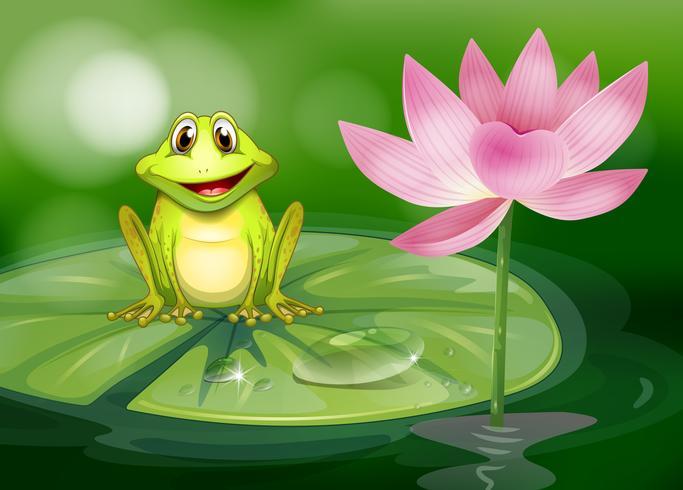 Een kikker naast de roze bloem bij de vijver