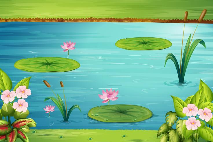 Scen med lotus i dammen