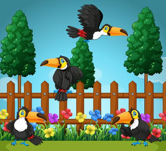 Tucanos voando no jardim