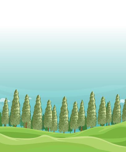 Un campo con alberi di pino vettore